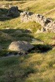 thumbs villanderer alm eine einmalige naturlandschaft 19 Impressioni