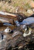 thumbs villanderer alm eine einmalige naturlandschaft 20 Impressioni