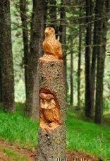 thumbs rinder 15 Impressioni dalla foresta incantata