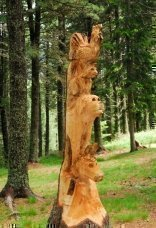 thumbs rinder 17 Impressioni dalla foresta incantata