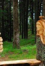 thumbs rinder 23 Impressioni dalla foresta incantata